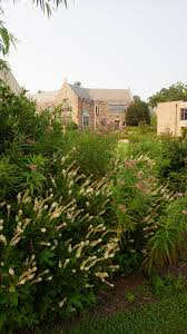 native plants maryland why include native plants in your garden university of maryland