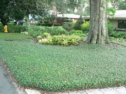 Home Improvement Backyard Landscaping Ideas Tree Landscape Design U2013 Andrewtjohnson Me