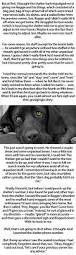 the story of a dog named tank fellowship of the minds
