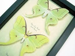 green butterflies insects more archives butterfly designs