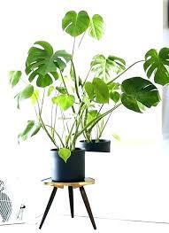 decorative indoor plants decorative house plants decorating tall decorative indoor plants