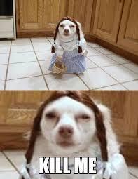 Kill Me Meme - kill me funny animal meme