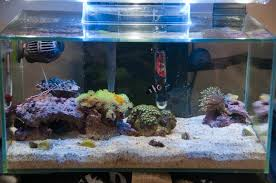 Fluval Sea Marine And Reef Led Strip Lights by Fluval Edge Marine Conversion With Clownfish Marine Aquarium