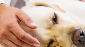 muskelschwäche muskelschwäche archives der hund