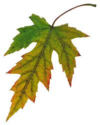 why do leaves change color the social silo