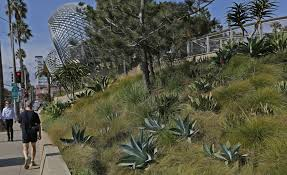 los angeles native plants photos tongva park in santa monica proves a paradise can grow