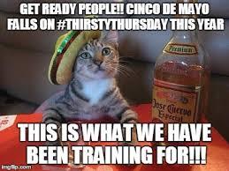 Meme Cinco De Mayo - tequila cat meme generator imgflip