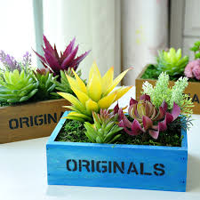 home decoration with plants why stick to same old terracotas for