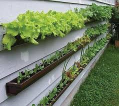 container vegetable gardening tips interesting ideas for home