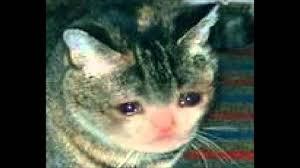 Sad Cat Meme - calico sad cat theme youtube photograph of exquisite cat crying meme