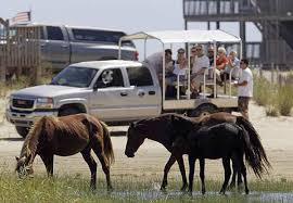 North Carolina wildlife tours images North carolina wild horse population faces an uncertain future