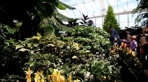 botanical gardens in montreal butterflies event april 2016 youtube
