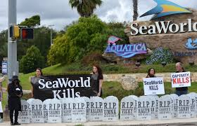 new halloween attraction at seaworld an orca graveyard the daily