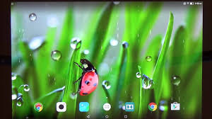halloween wallpaper for android phones macro spring live wallpaper for android phones and tablets youtube