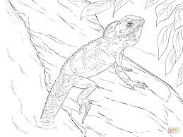 realistic chinese water dragon download coloring pages animal