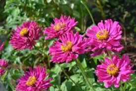 Fragrant Flowers Fragrant Flowers Make Your Garden Attractive U2013 Gardens Abound