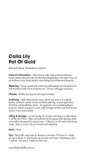 bloomin bulbs calla lily pot of gold 1 zantedeschia calla lily