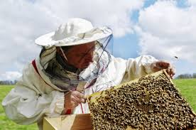 join the swarm how to become a chicago beekeeper the allstate blog