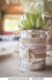 succulent plant silver tin can vase stock photo 640341829