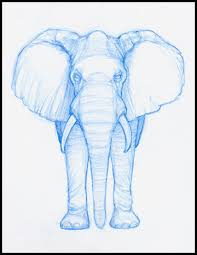 drawn elephant front view pencil and in color drawn elephant