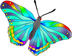 as the butterflies the colors are not totally but