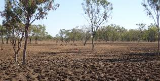 australian native plants for clay soil fire in the western australian rangelands agriculture and food