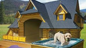 cool dog houses top 10 most luxurious and cool dog houses youtube