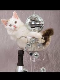Happy New Year Cat Meme - happy new year 2016 cynthia stacey