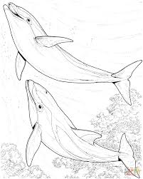 two dolphin coloring page free printable coloring pages