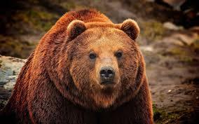 bear crossing 5 lost bearadise