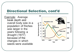 evolutionary concepts types of selection types of evolution rate