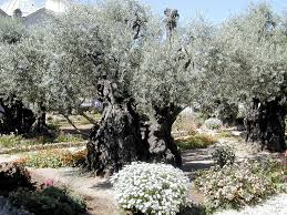 this i in the garden of gethsemane