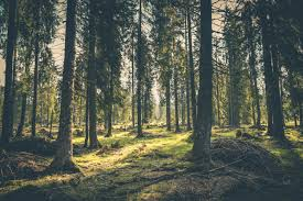 forest images Forest pictures pexels free stock photos jpg&a