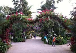 orchid archs jurong hill singapore jurong bird park