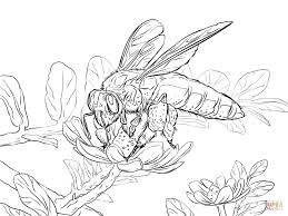 giant honey bee coloring page free printable coloring pages bee