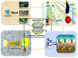 frontiers nanotechnology in sustainable agriculture recent