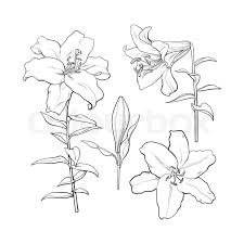 wedding flowers drawing set of white flowers in side and top view sketch