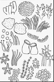 drawn coral coloring page pencil and in color drawn coral