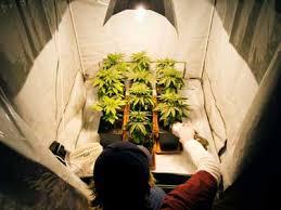 proper lights for growing weed different types of reflective materials for indoor marijuana grow room
