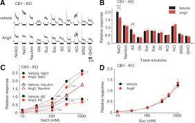 angiotensin ii modulates salty sweet taste sensitivities
