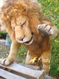 lion puppet realistic lion puppet animatronicbear s new lion is n flickr