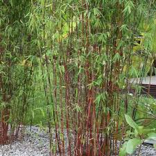 grass kitchen cabinet hinges grass cabinet hinges grass kitchen cabinet hinges tbootsus grass