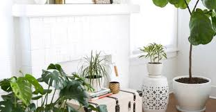 plants for office artificial trees for living room peenmedia com