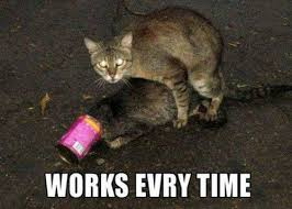 Cat Trap Meme - a trap
