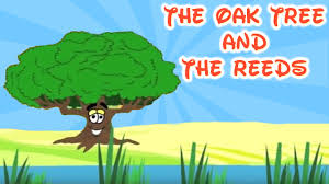 the oak tree and the reeds moral stories youtube