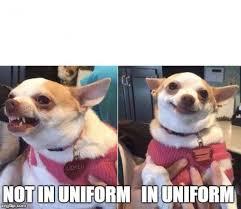 Meme Chihuahua - angry chihuahua happy chihuahua meme generator imgflip