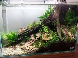 73 best aquariums images on aquarium ideas fish tanks