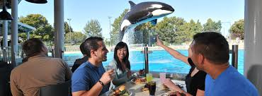 san diego thanksgiving buffet dine with orcas seaworld san diego