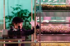 Ikea Krydda Vaxer Usa The Top 10 Best Blogs On Hydroponic Garden