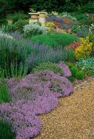 Backyard Ground Cover Ideas 143 Best Drought Tolerant California Garden Images On Pinterest